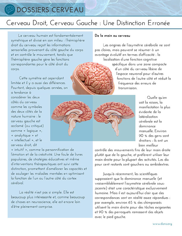 Right Brain, Left Brain: A Misnomer (French)