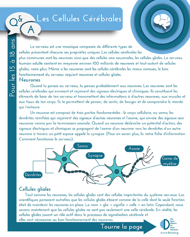 Cells of the Brain, Grades 9-12 (French)