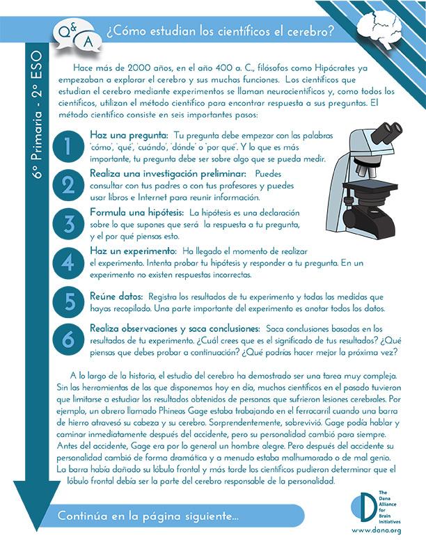How do Scientists Study the Brain? Grades 6-8 (Spanish)