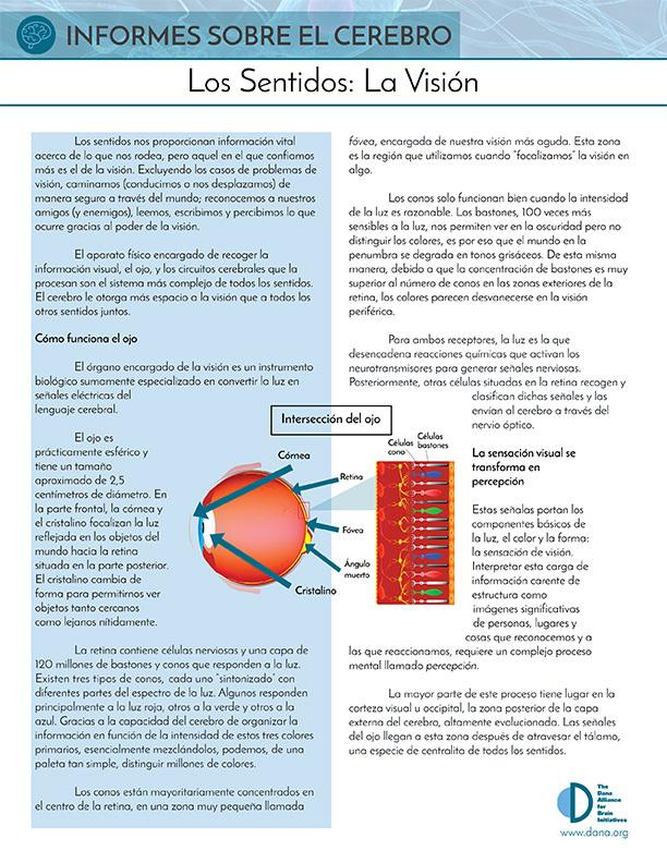 Senses: Vision (Spanish)