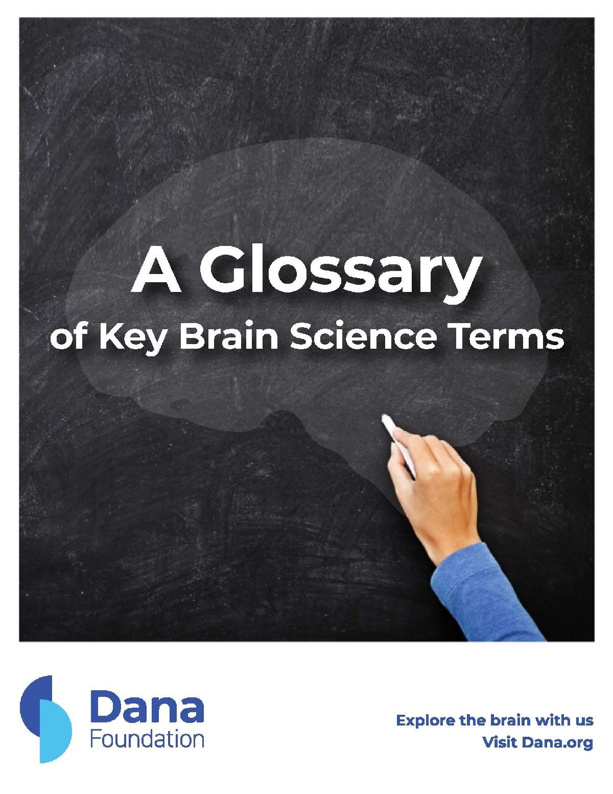 Brain Terms Glossary