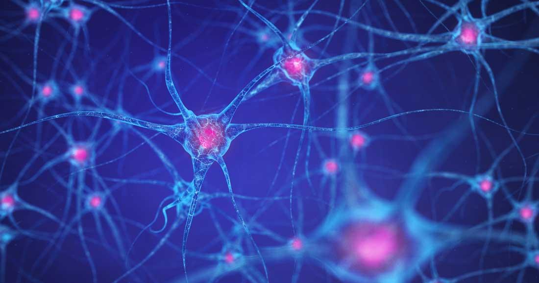 How Does the Brain Work? | Dana Foundation