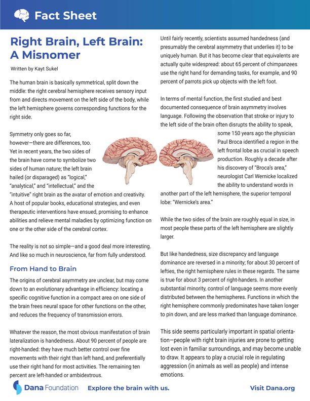 Right Brain, Left Brain: A Misnomer
