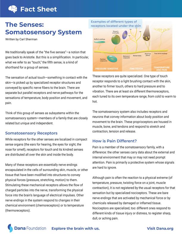 Senses: The Somatosensory System