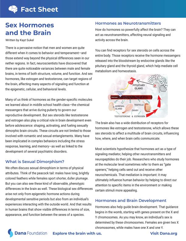 Sex Hormones and the Brain