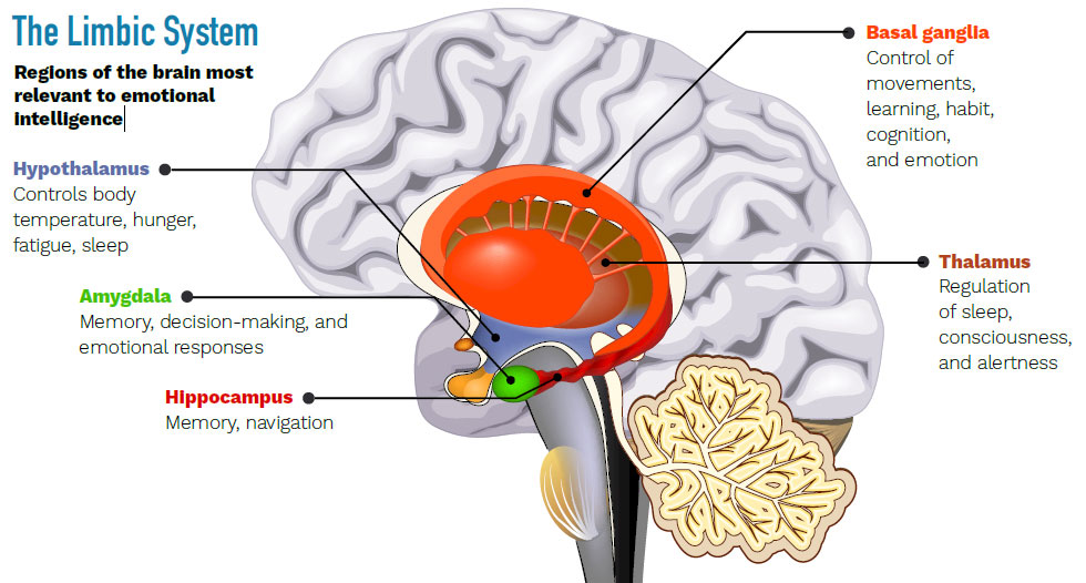 cartoon diagram of brain showing regions connected with mood