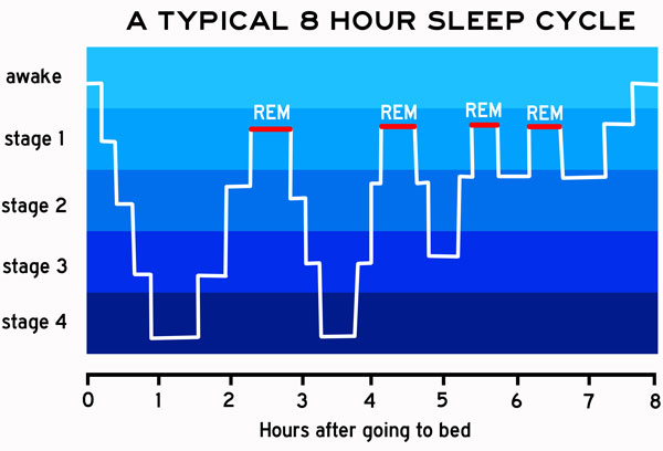 fever chart showing typical sleep cycle
